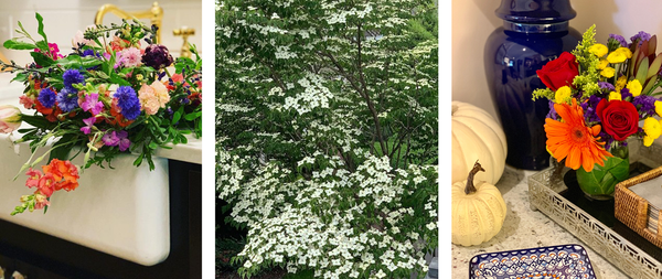2019 Spring and Summer Flowers In Review