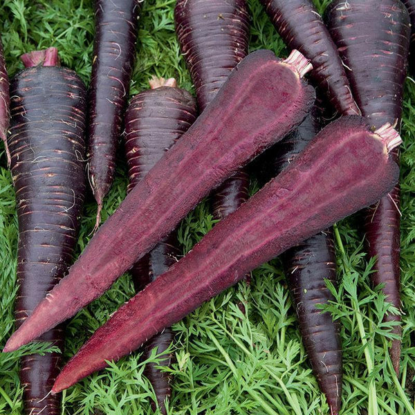 Carrot Deep Purple F1