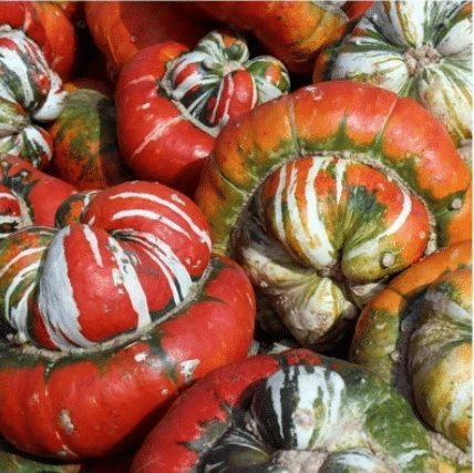 Rare and exotic pumpkin seeds