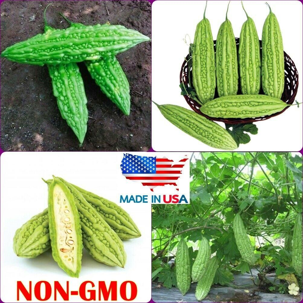 Bitter Melon Seeds Bitter gourd Squash balsam-pear Seeds FREE SHIP DOMESTIC USA