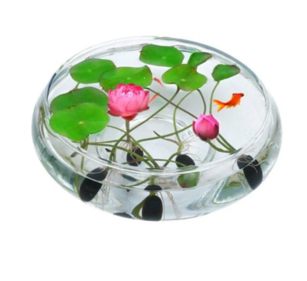 The PREMIUM  BONSAI LOTUS FLOWER SEEDS