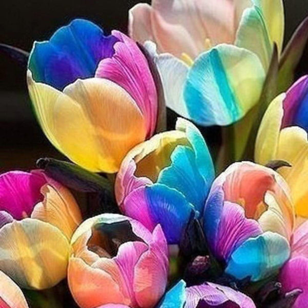 RAINBOW TULIP BULBS