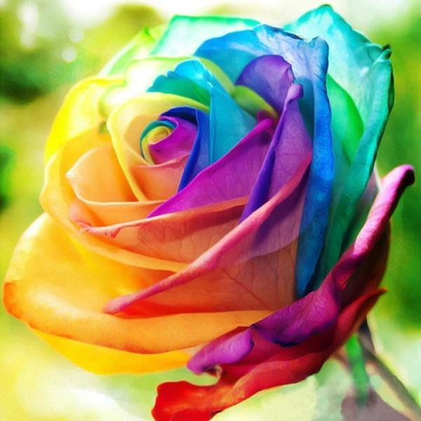 Rare Holland Rainbow Rose Flower Seeds