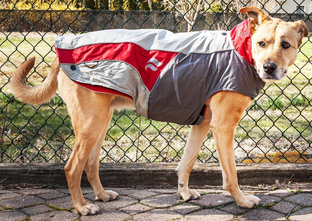 Dog Helios ® Lotus-Rusher Waterproof 2-in-1 Convertible Dog Jacket w/ Blackshark technology