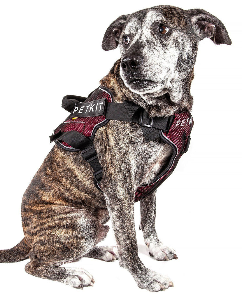 PETKIT ® 'AIR' Quad-Connecting Cushioned Chest Compression and Reflective Breathable Premium Safety Mesh Pet Dog Harness