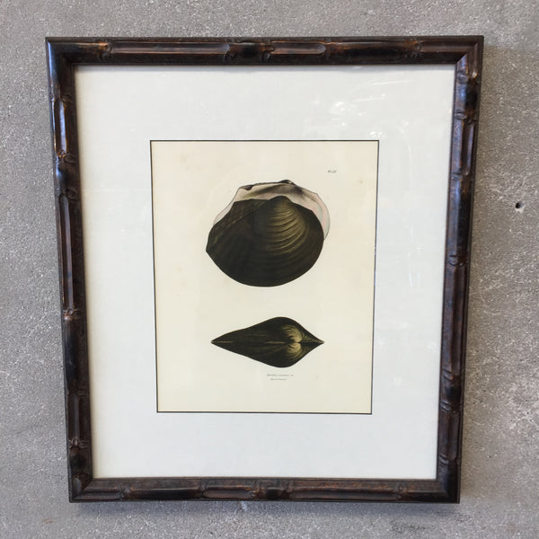 Framed Antique Shell Book Page