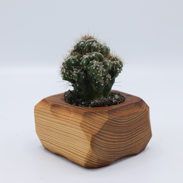 Succulent Desktop Planter - Single