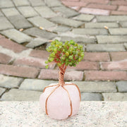 Undying Gemstone Plant (Peridot & Rose Quartz) Tree of Life