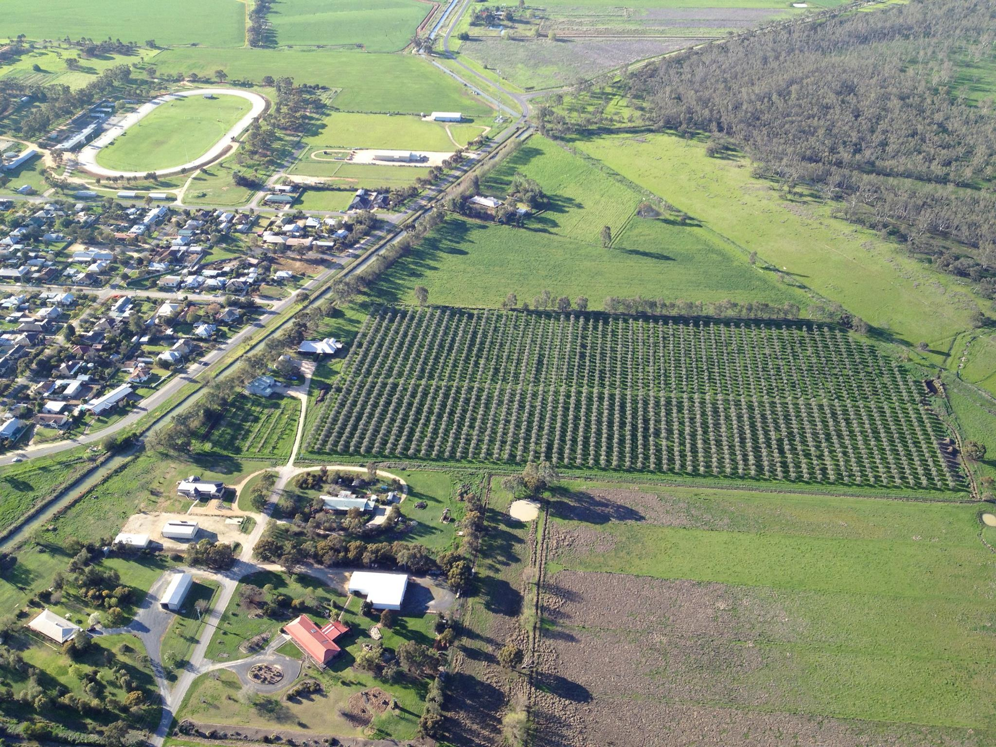 Aerial view of Salute Oliva olive grove