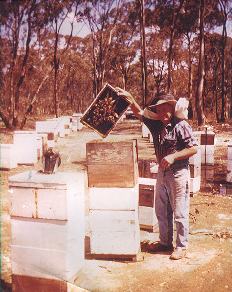 Brian working his beehives