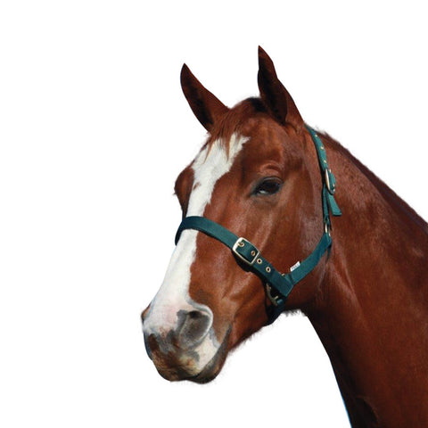 WARMBLOOD HEADSTALL