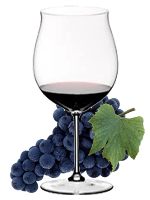 UVA DI TROIA   –  RED GRAPE FOR RED WINE