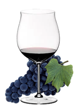 CORVINA  – RED GRAPE FOR  RED WINE