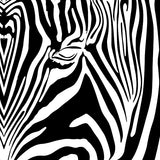 NH-40 / Eye of the Zebra / Pro Tri-Pack