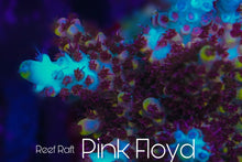 Load image into Gallery viewer, Reef Raft Pink Floyd