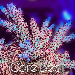 MotorCityCorals, Care Bear
