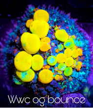 Load image into Gallery viewer, WWC OG Bounce Mushroom