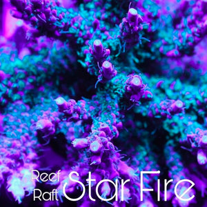 Reef Raft Star Fire