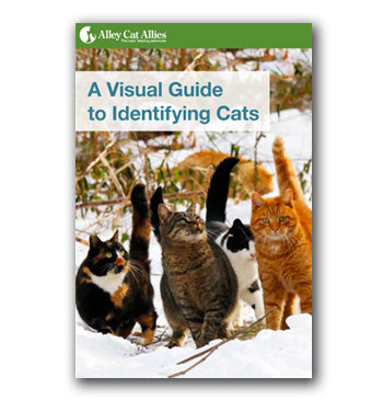 Cat Identification Guide
