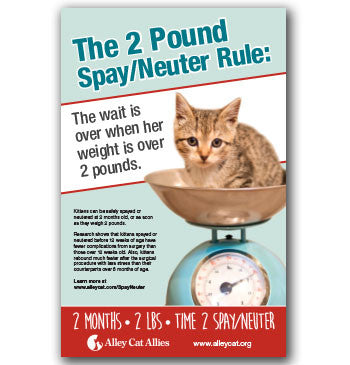 Pediatric Spay/Neuter Poster