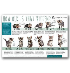 Veterinary Poster Pack