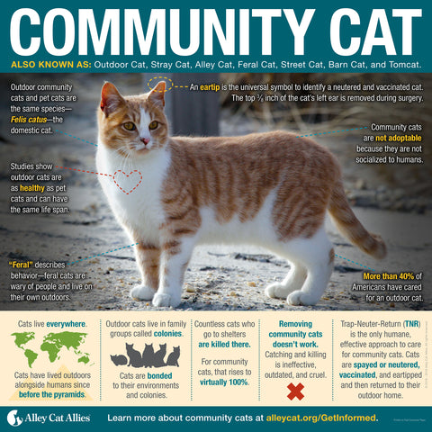 Community Cat Infographic Poster
