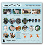 Look at That Cat! A Quick Guide to Identifying Cats Infographic Poster