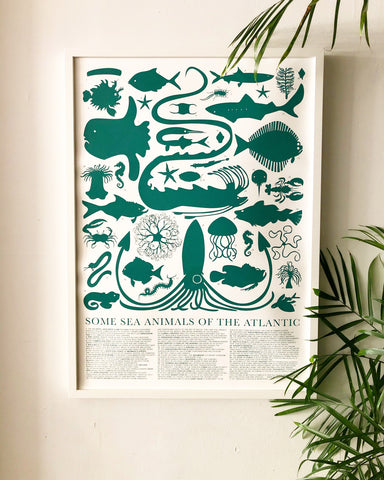 Sea Animals of the Atlantic Poster
