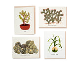Succulents Box Set of 8