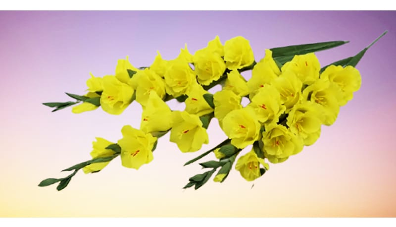 Lovely crepe paper gladioli that every advanced crafter should try for their Cinco de Mayo decors