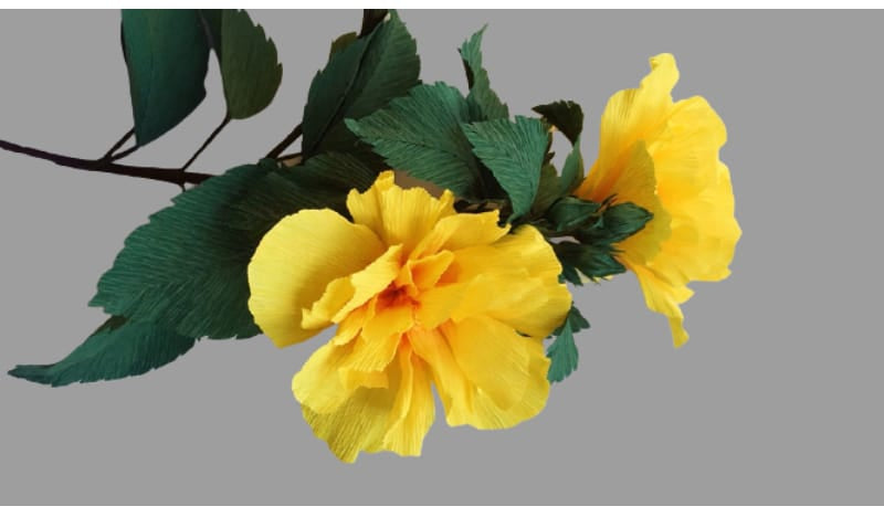 Double hibiscus is excellent for your Cinco de Mayo decorations