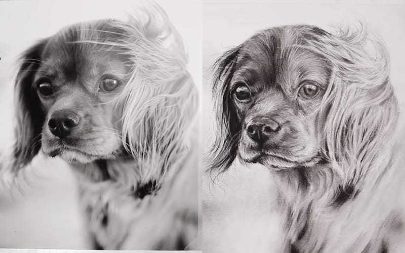 A charcoal drawing of a dog and its reference image - Image by Kirsty Partridge Art
