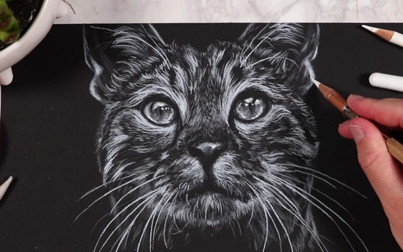 A drawing of a cat on black paper - Image by Kristy Partridge
