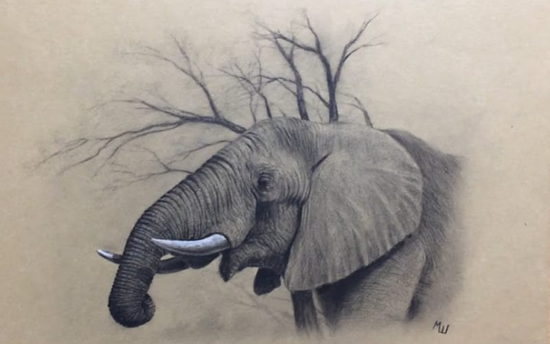 A drawing on an elephant on toned paper - Image by Miroslav The Pencil Maestro