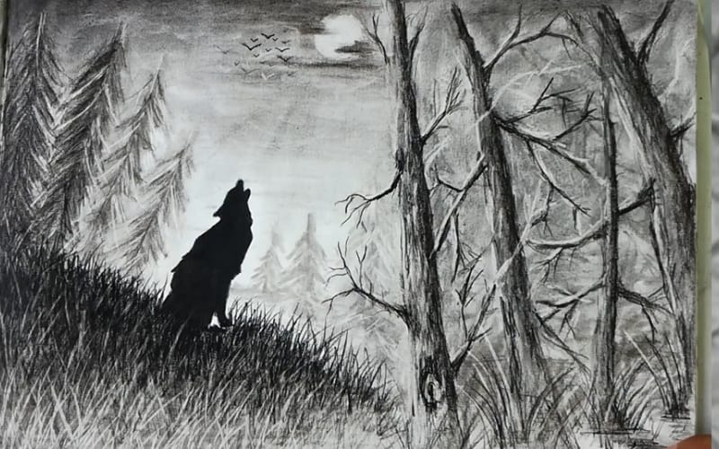 A lone wolf howling at the moon in the middle of a pine forest - Image by Hacks360