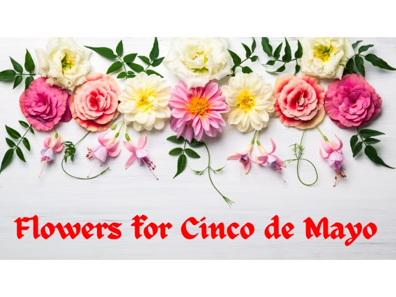Crepe paper flowers for your Cinco de Mayo celebrations