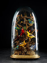 Charger l'image dans la galerie, 19th C, Large Victorian oval glass dome/shade with 15 Exotic Colourful Birds.
