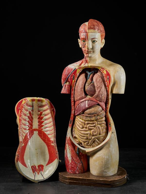 Female Life-size Anatomical Ecorche Torso Model, Shimadzu Corp, Kyoto, Japan, 1934.