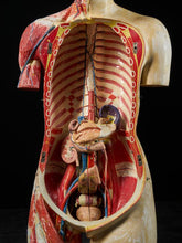 Afbeelding in Gallery-weergave laden, Female Life-size Anatomical Ecorche Torso Model, Shimadzu Corp, Kyoto, Japan, 1934.