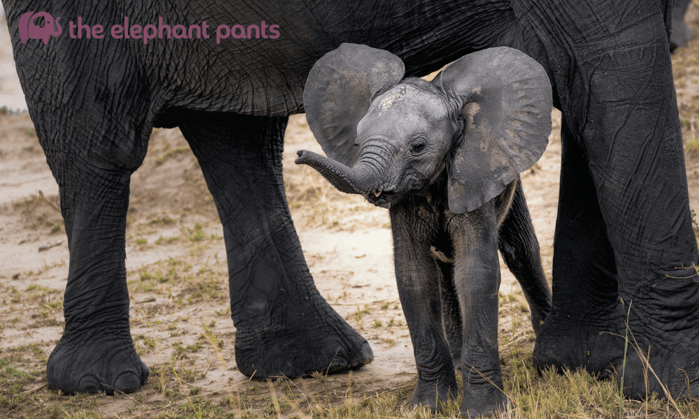 55 Interesting Facts About Elephants That Will Make You Love Them Even More