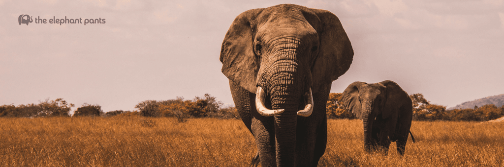 13 Life Lessons Elephants Have Taught Us