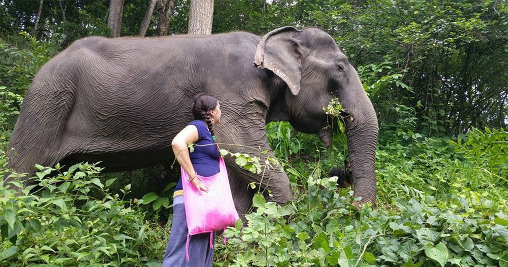A Week With Thong Dee The Elephant