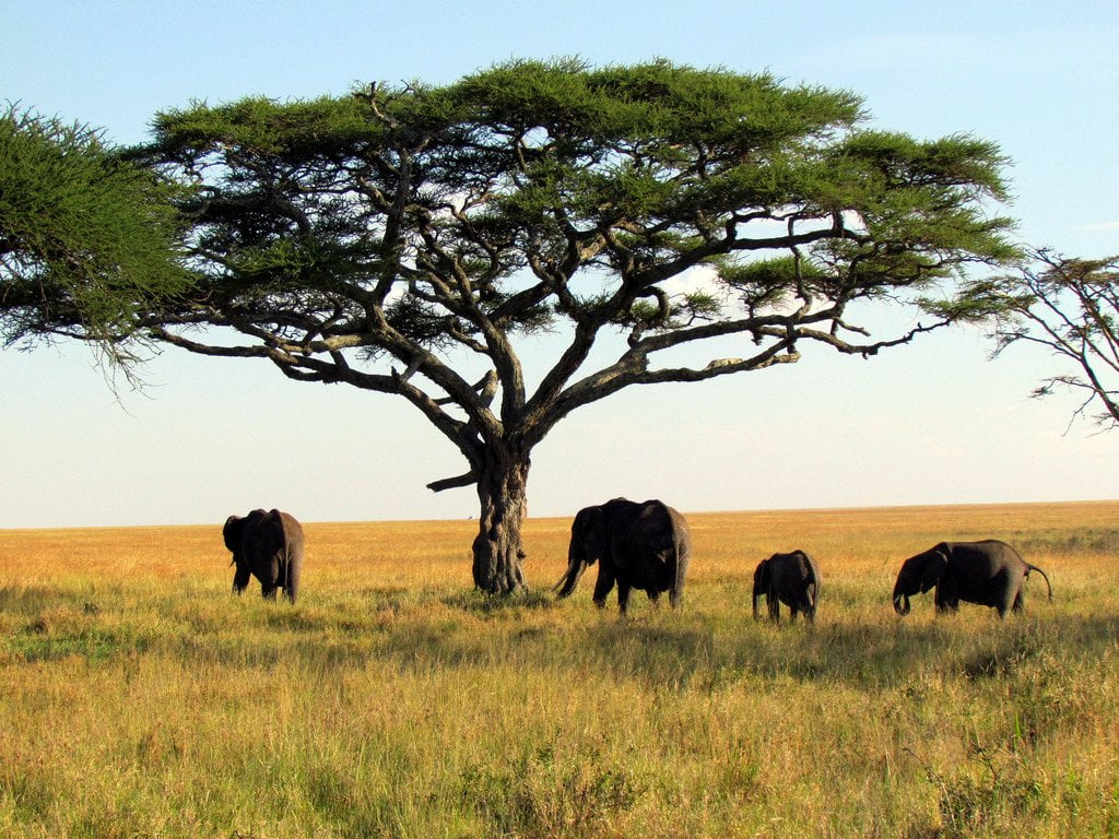 3 African Nature Reserves Reshaping Conservation