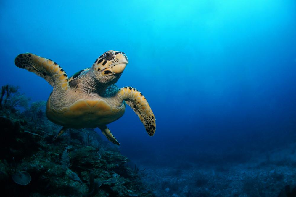 Why We Need Sea Turtles As Much As They Need Us