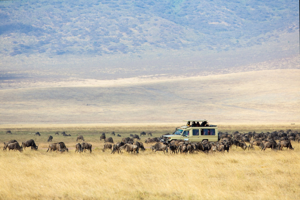 3 Safari Alternatives for the Wild Animal Lover on a Budget
