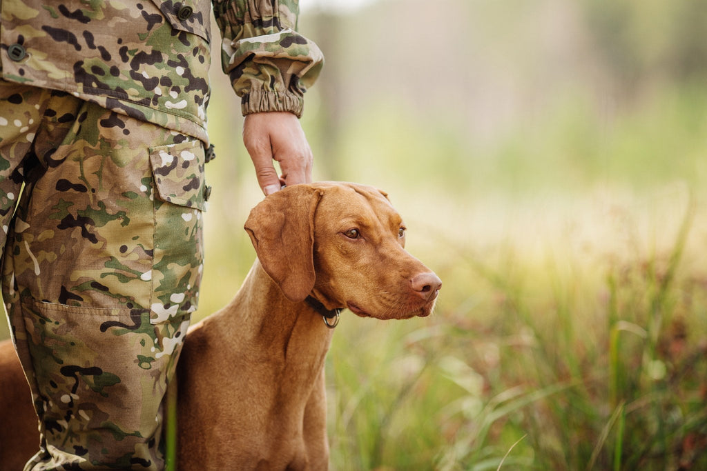 Dogs Join the Fight Against Poachers
