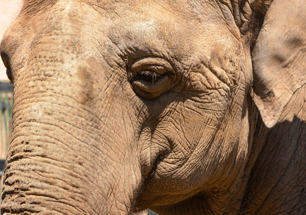 12 Ways Elephants Are More Like Humans Than You Thought