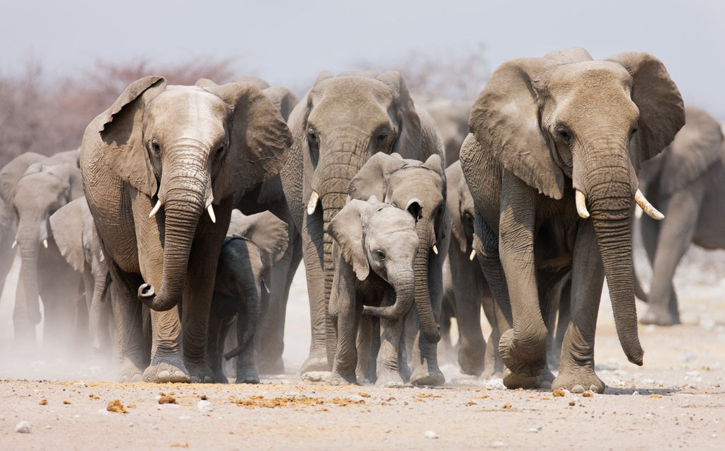 5 Everyday Changes You Can Make to Help Save the Elephants