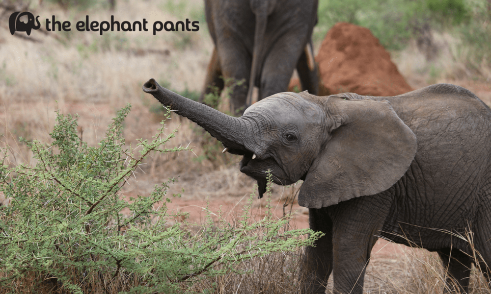Try Not to Smile: The Cutest Pictures of Elephants EVER
