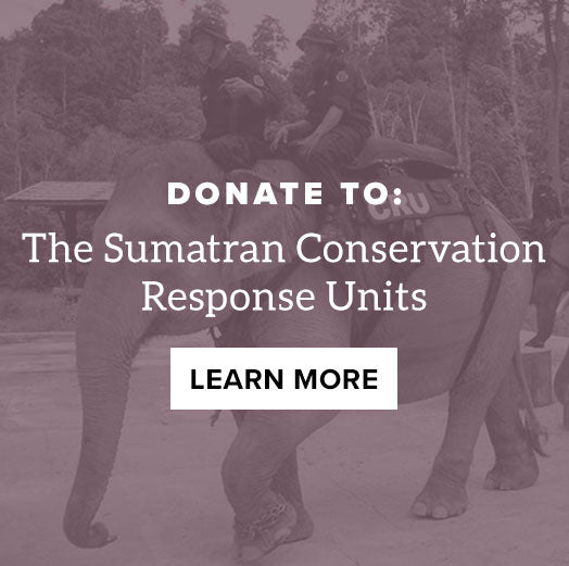 Donate to IEF: Sumatran Conservation Response Units